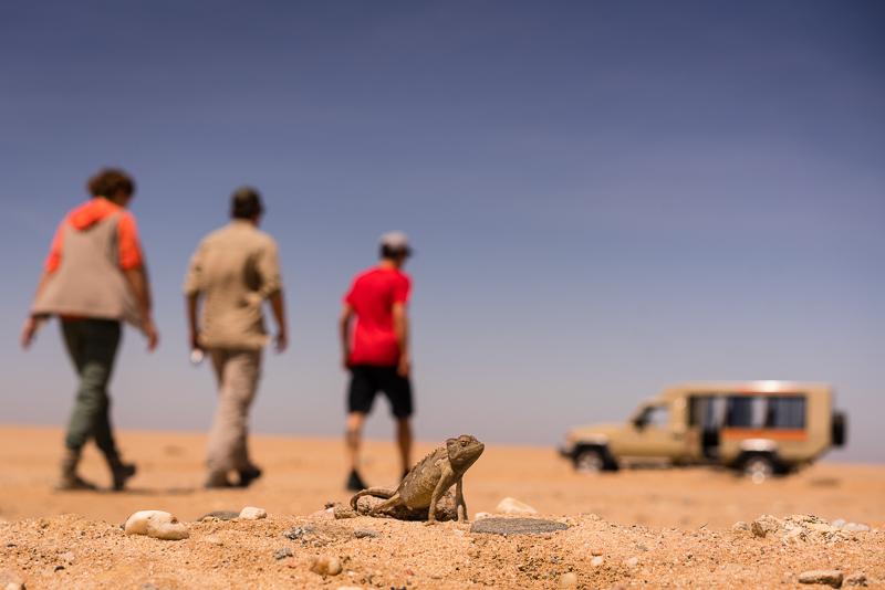 Chamäleon Safari