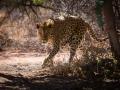 Leopard im Okonjima Park
