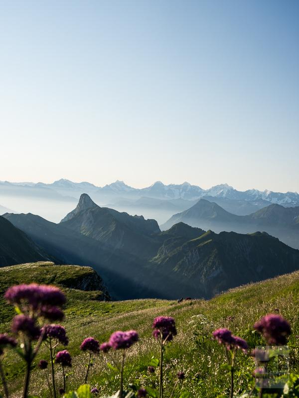 Stockhorn mit Berneralpen (Gantrisch)