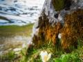 Fruehlingsblume Leiterepass